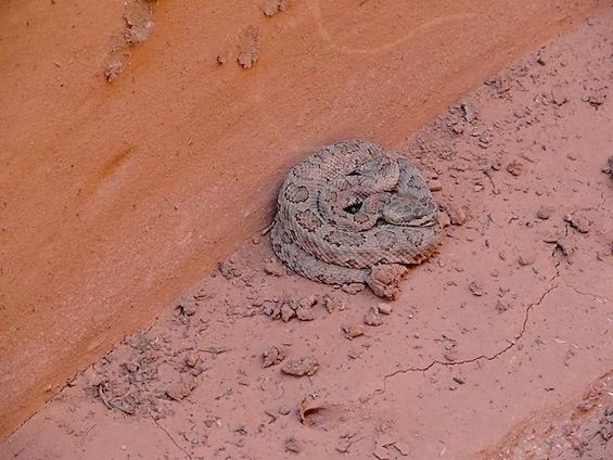 Snake in slot canyonFabio Achilli.jpg