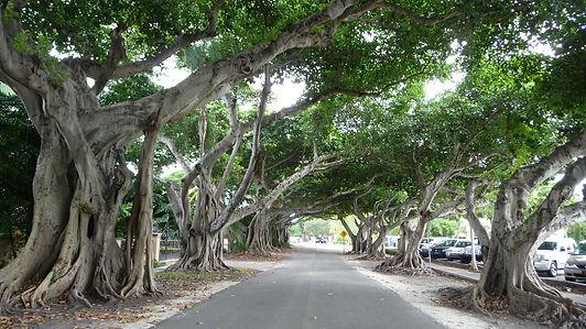 Coral Gables, Roadtrip ruter og nationalparker i USA