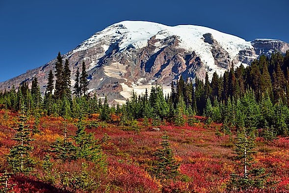 Mount Rainer nationalpark. Mark Stevens.jpg