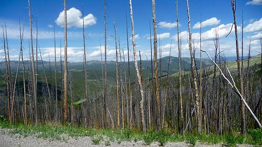Mt. Washburn. Roadtrip ruter og nationalparker i USA
