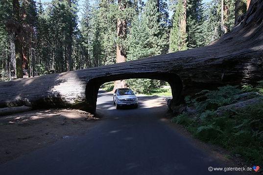 """Tunnel Log"", Sequoia Nationalpark, er populært til fototagning."