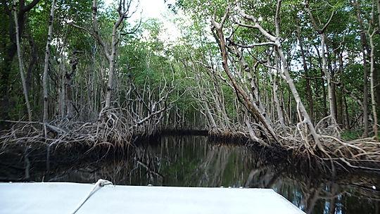 airboat i Everglades, Roadtrip ruter og nationalparker i USA