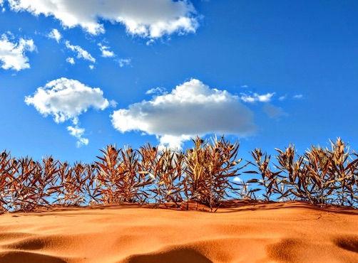 drivingusa.dk i Coral Pink Sand Dunes