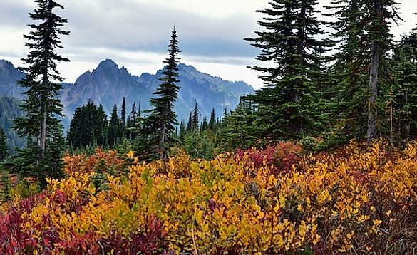 Mount Rainier Nationalpark. .jpg