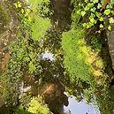 Dianne_Reflections.jpg