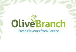 Olive Branch Brand Identity
