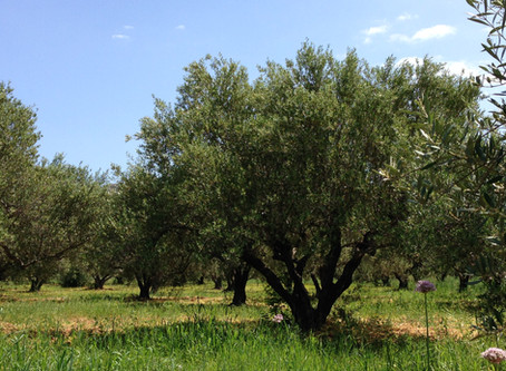 What's so special about our Olive Oil?