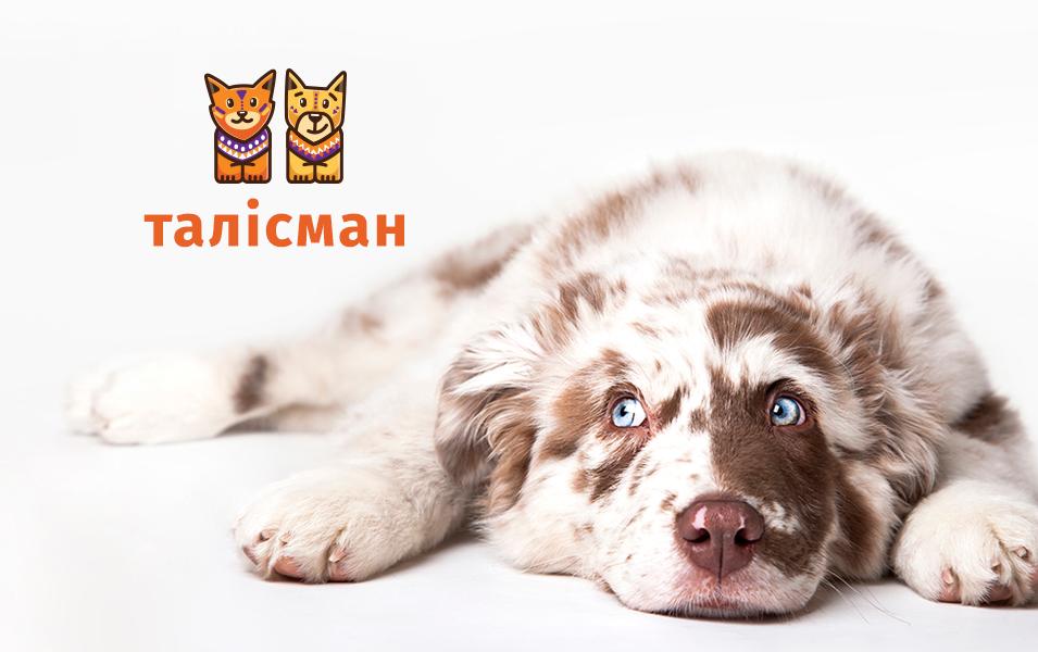 брендинг благодійного притулку для тварин