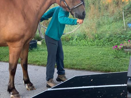 Des vacances pour nos chevaux.