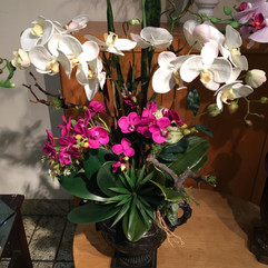 Orchid Special -2