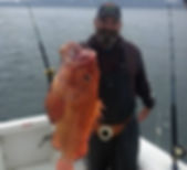 Yellow Eyed Rockfish