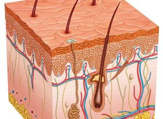 Legnagyobb szervünk: a bőr