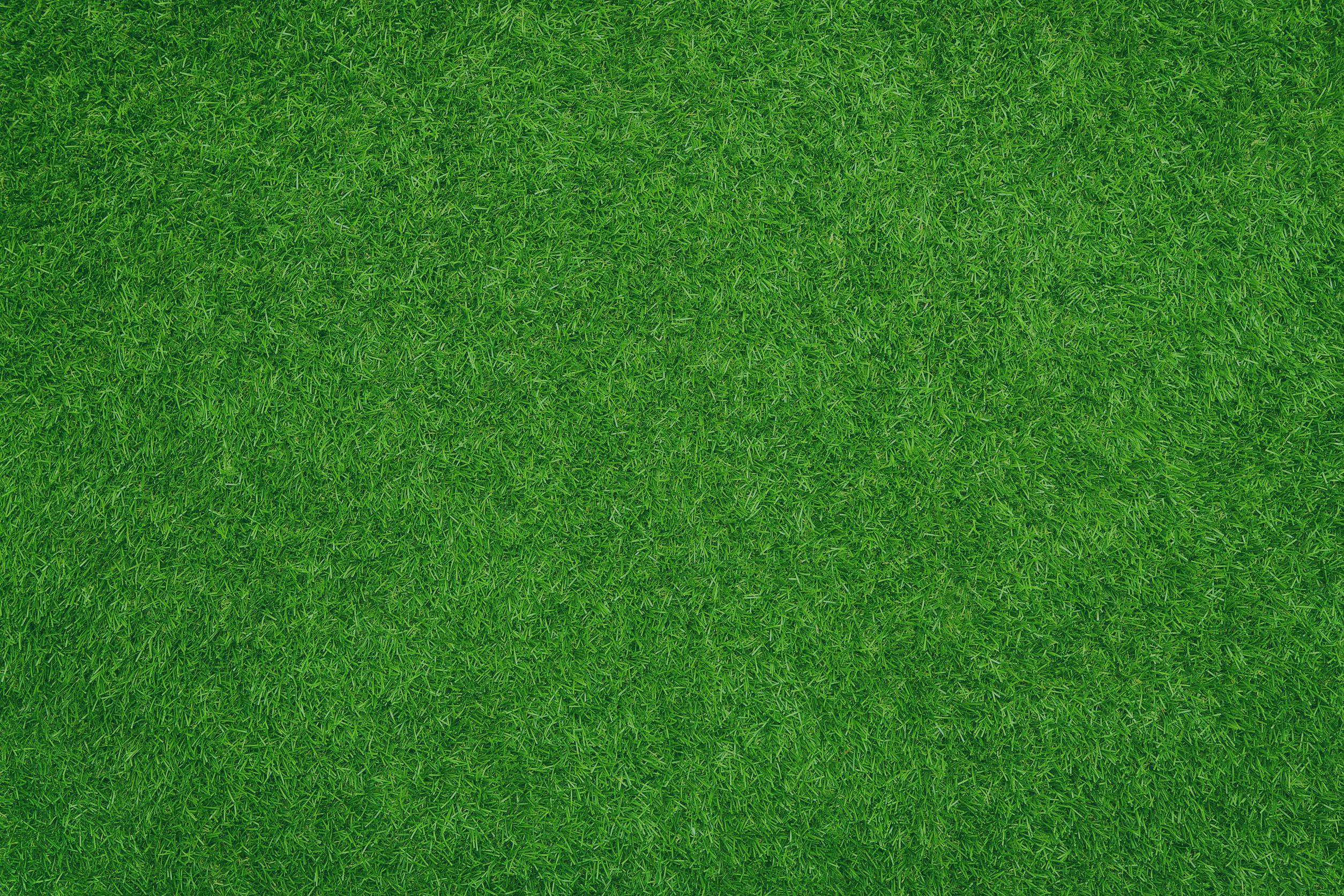 gazon+vert