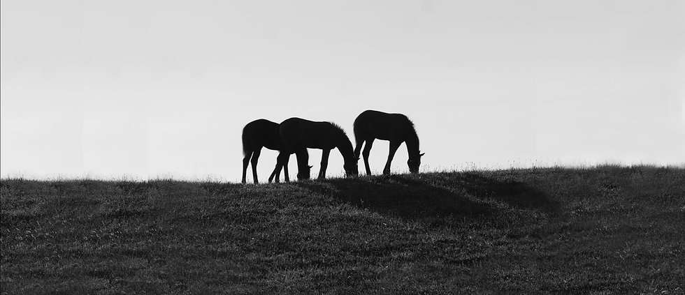 horse photographer in maryland