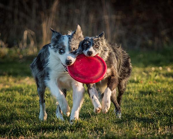 dogs NHT 6.jpg