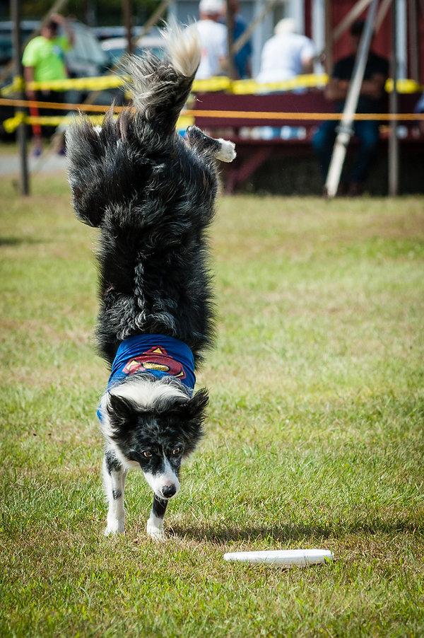 bully handstand.jpg