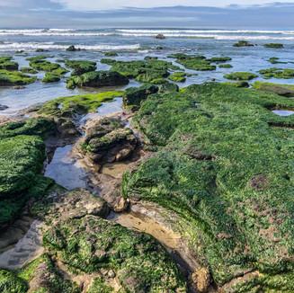 Playa Rosarito.JPEG