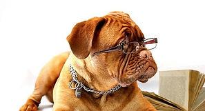 dog-734689_640-830x450 (1).jpg