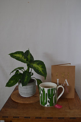 Dieffenbachia with pot
