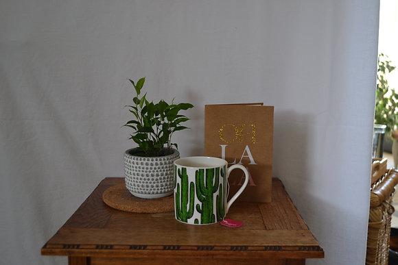 Ficus Benjamina with pot