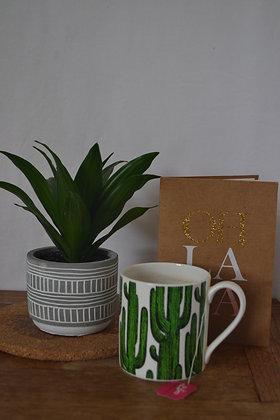 Dracena Fragrans Compacta with pot