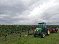 vineyards oct 2017 (68)