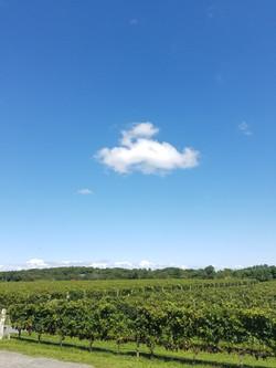 vineyards oct 2017 (64)