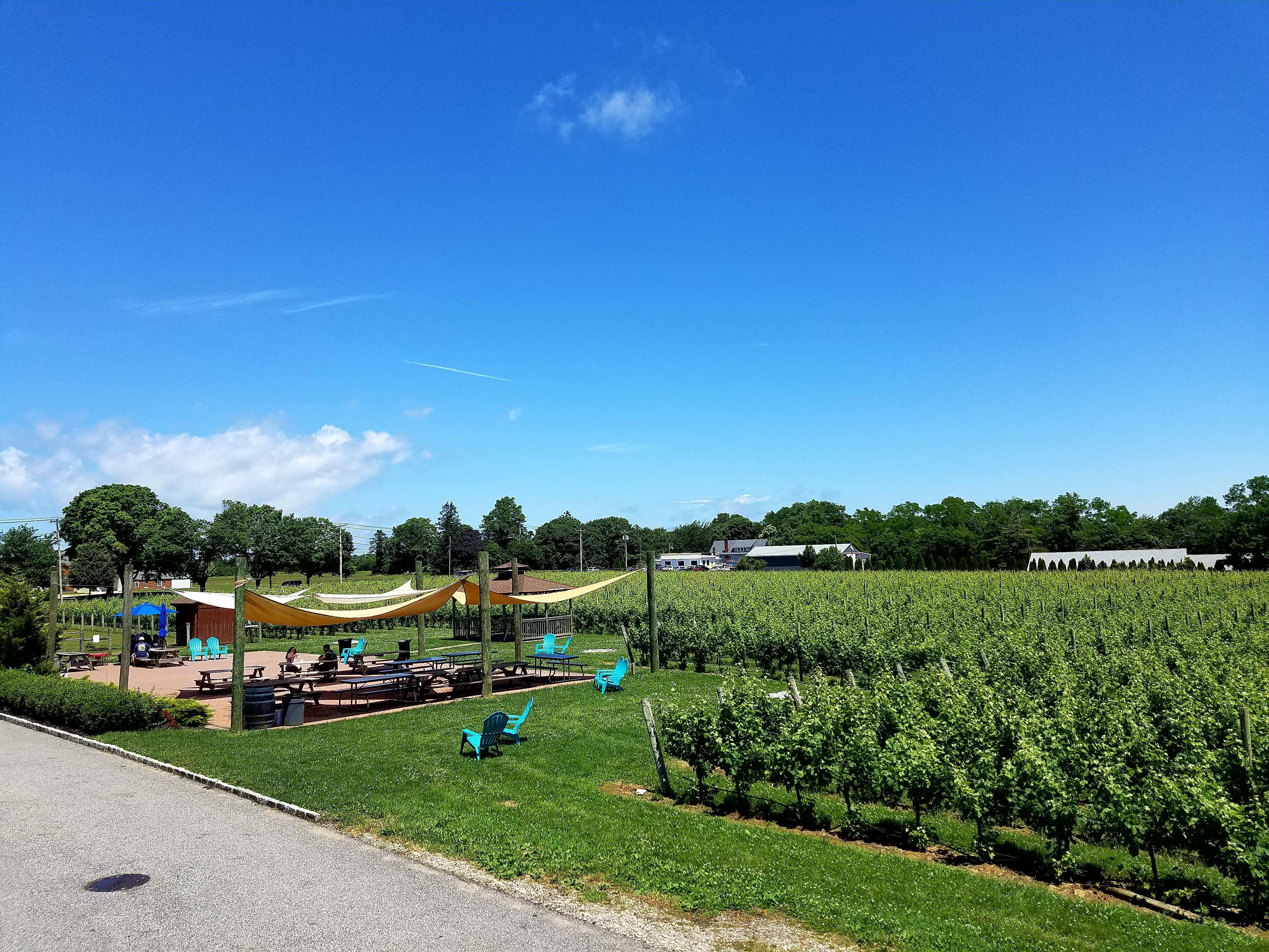 vineyards oct 2017 (49)