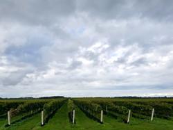 vineyards oct 2017 (66)