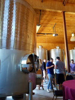 vineyards oct 2017 (47)