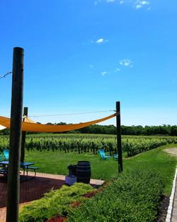vineyards oct 2017 (41)