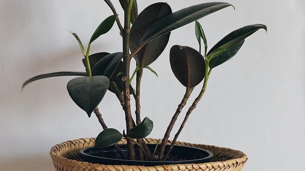 Small plant basket No.2