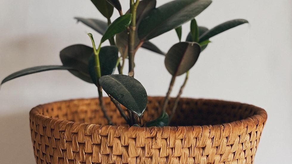 Medium plant basket