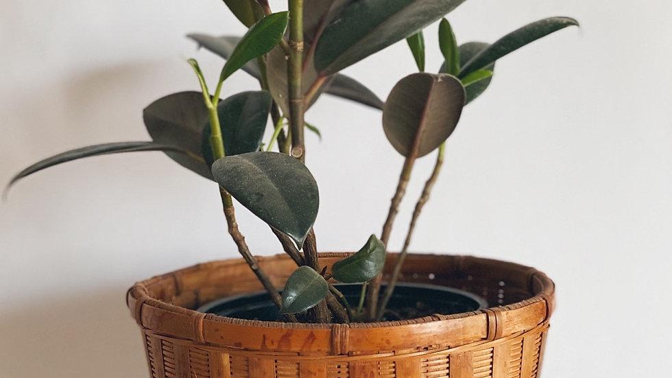 Small plant basket No.1