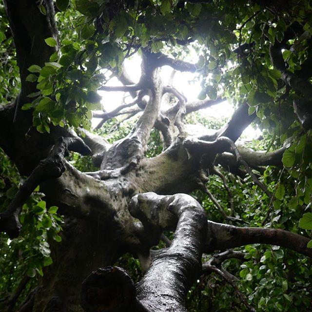Beneath the weeping beech in Hyde Park!__#RowanOakwing _#weepingbeech #fairyrealms_#parklife #london