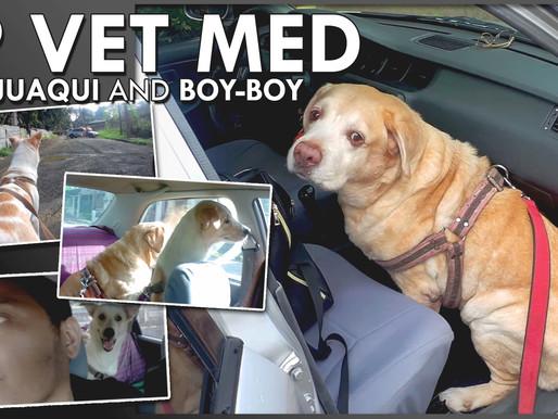 UP Vet Med: The Budget-Friendly Animal Hospital
