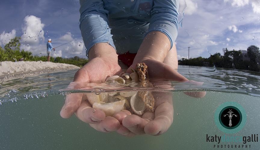 Seashells at Blind Pass