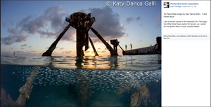 The winning pic from the Dry Tortugas