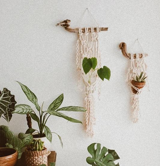 טבע-זוג מתלי עציץ קטנים