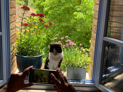 Marla alla finestra