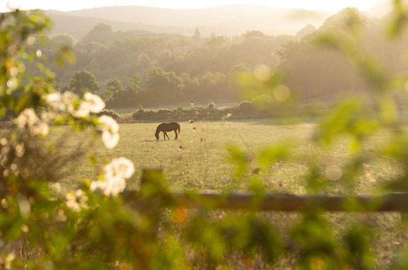 cavallo, horse, horse back ridimg, farm, organic, stud, racehorse, cavallo da corsa, purosangue inglese, passeggiate a cavallo, fattoria, biologico, olistico