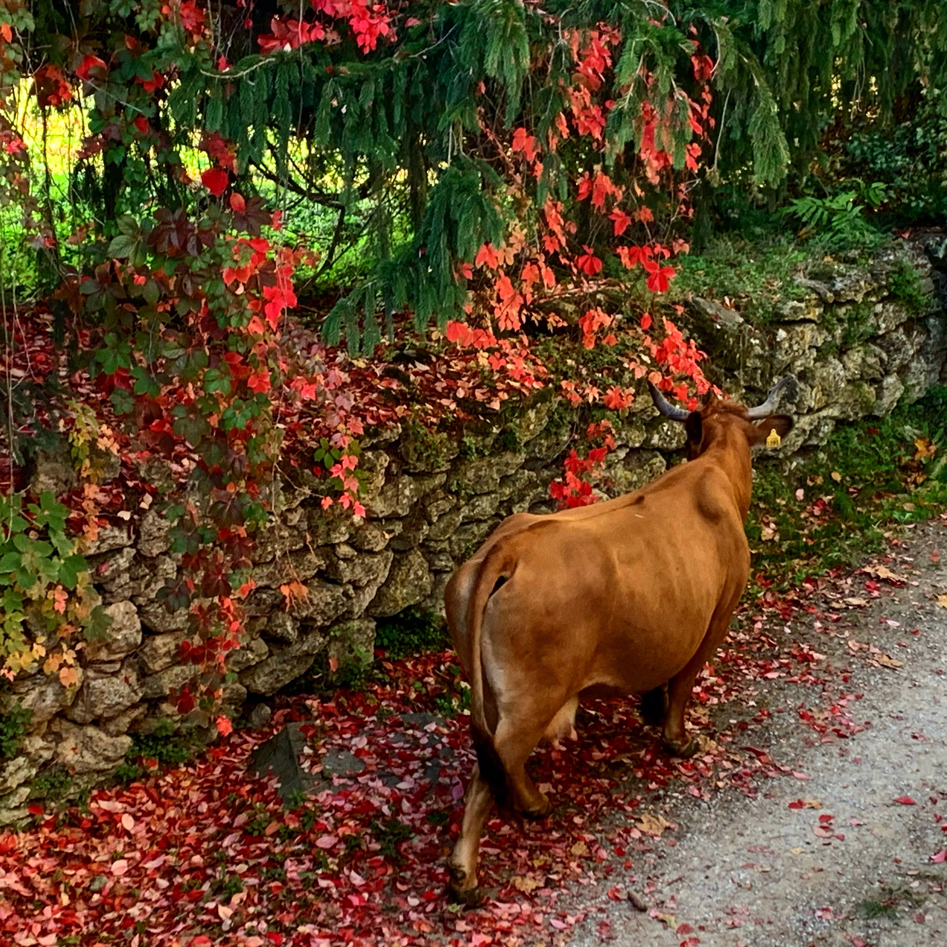 Bea passeggia per la strada