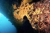 Entrée d'une grotte sous-marine accessible en plongée depuis Marseille