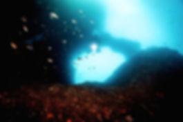 Plongez sur les plus beaux sites de plongée autour de Marseille à la découverte de la flore, faune, épaves, tombant & grottes de Méditerrannée