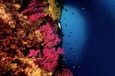 Découvrez les merveilles sous-marine de la méditerrannée à Marseille dans les plus beaux milieu protégés