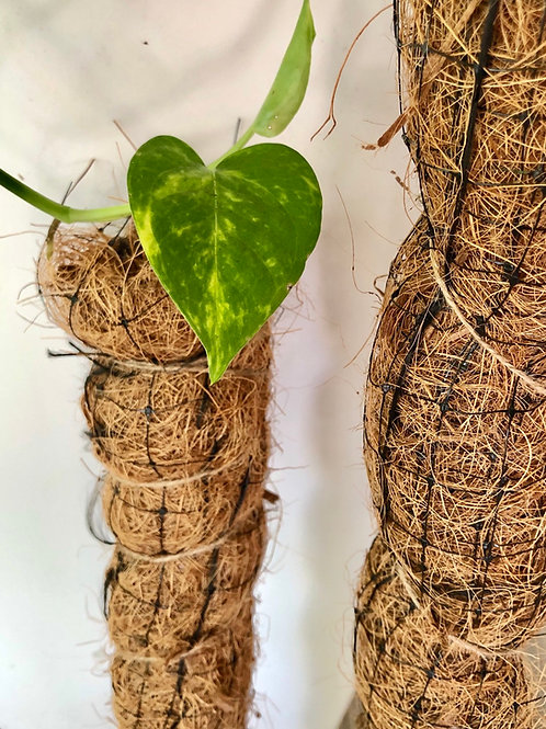 Totem para plantas de estopa de coco