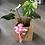 Thumbnail: Planta Monstera Deliciosa Día de la Madre