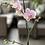 Thumbnail: Orquídea Phalaenopsis 1 tallo