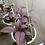 Thumbnail: Escudo persa (strobilanthes dyerianus) en Canasta Elba 21.5cm