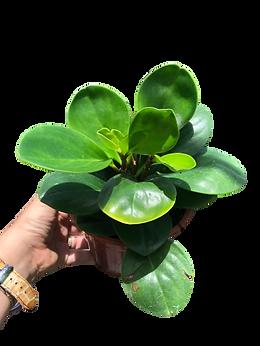 planta3.png